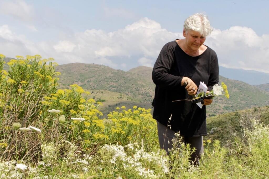 Primavera Ute Leube ist immer auf der Suche nach Inspiration. In den Bergen Korsikas pflückt sie Wildblumen